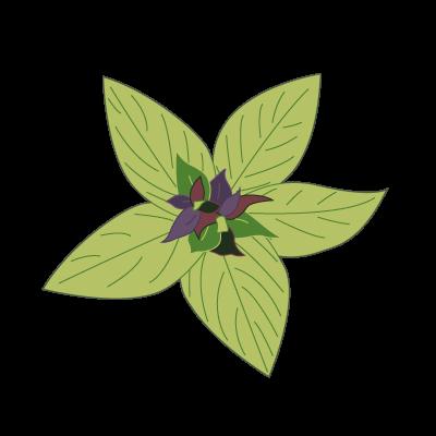 Basilika kukkia